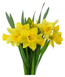 Spring Bouquet Of Daffodil Flowers Isolated Sticker