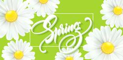 Spring Daisies Sticker