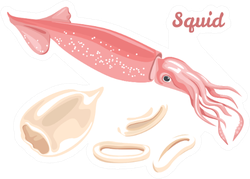 Squid Fresh Seafood, Raw Squid Fillet Ready For Cooking Sticker