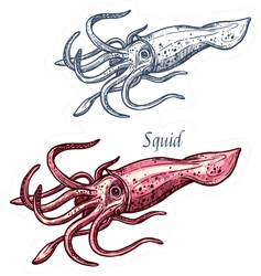 Squid Seafood Isolated Sketch Sticker