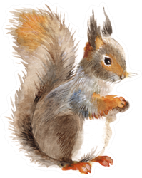 Squirrel Isolated On A White Watercolor Sticker