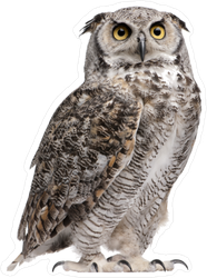 Staring Great Horned Owl Sticker