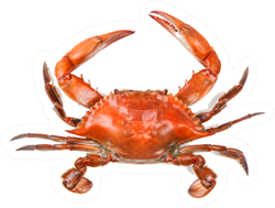 Steamed Blue Crab Sticker