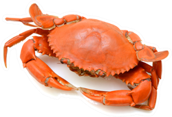 Steamed Crab On White Background Sticker