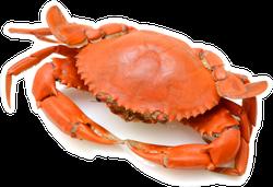Steamed Crab On White Background Sticker