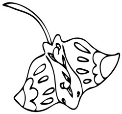 Stingray Illustration Doodle Style Coloring Page Sticker