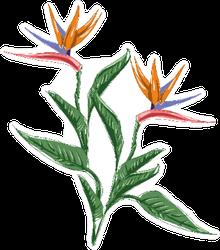 Strelitzia Flower Bird Of Paradise Illustration Sticker