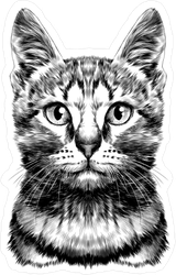 Striped Cat Head Sketch Sticker