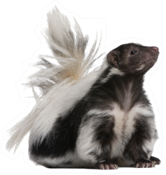 Striped Skunk, Mephitis Mephitis Sticker