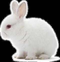 Studio Shot Of A White Rabbit Sticker