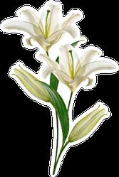 Summer Lily Flower Bunch Sticker