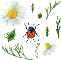 Summer Meadow Plants And Ladybug Sticker