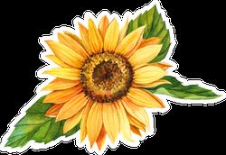 Sunflower Watercolor Illustration Sticker