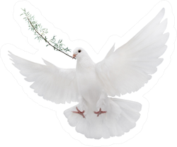 Symbol White Dove With Palm Branch Isolated On White Sticker