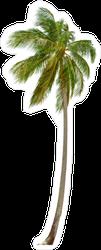 Tall Coconut Palm Tree Sticker