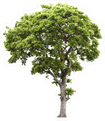 Tall Green Tree Sticker