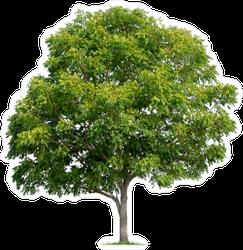Tall Shade Tree Sticker