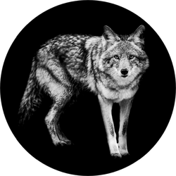 Template Of Coyote In B&w Sticker
