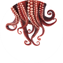 Tentacles Of Squid Circle Sticker