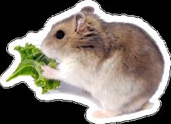 The Djungarian Hamster Eating Lettuce Sticker