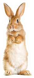 The Funny Rabbit Is Standing On Its Hind Legs Sticker