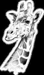 The Head Of A Giraffe Sketch Sticker