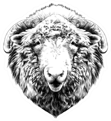 The Head Of A Sheep Hanging Face Sticker