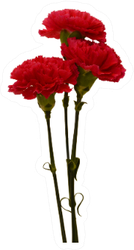 The Long Stem Red Carnations Sticker