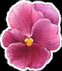 The Pink Garden Bicolor Pansy Flower Sticker