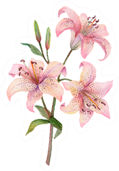Three Pink Watercolor Lilies Isolated Sticker