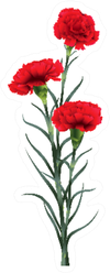 Three Red Carnations Flowers Standing Tall Sticker