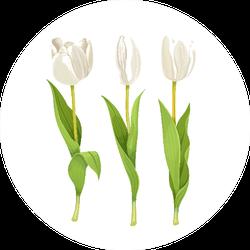 Three White Flowers Tulips Sticker