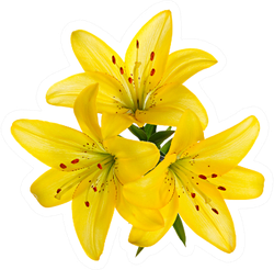Three Yellow Lily Flowers Sticker