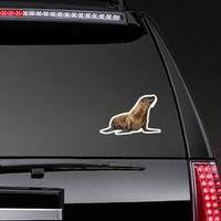 Young California Sea Lion Sticker