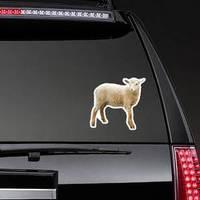 Sheep Isolated On White Background Sticker