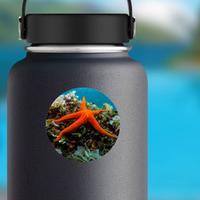 Starfish And Sponge Of The Mediterranean Sea Sticker