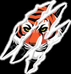 Tiger Head Claw Mark Sticker