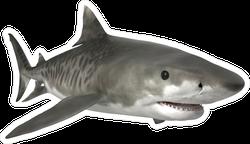 Tiger Shark Swimming Sticker