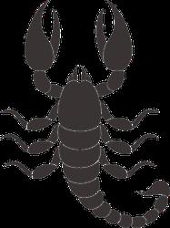 Top View Scorpion Sticker