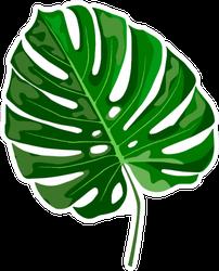 Tropical Leaf Monstera Sticker