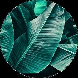 Tropical Leaf Texture, Large Palm Foliage Sticker