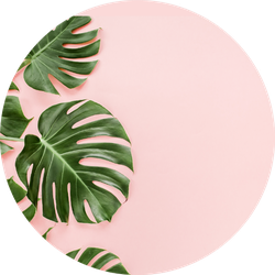 Tropical Leaves Monstera On Pink Background Sticker Tropical leaves free background free photo. tropical leaves monstera on pink background sticker