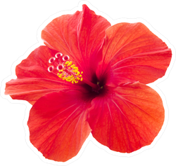 Tropical Red Hibiscus Flower Sticker