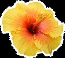 Tropical Yellow Hibiscus Sticker