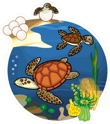 Turtle Life Cycle Sticker