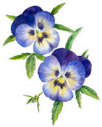 Two Blue Pansies With Leaves Sticker