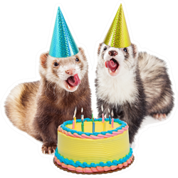 Two Funny Ferrets With Birthday Hats And Cake Sticker
