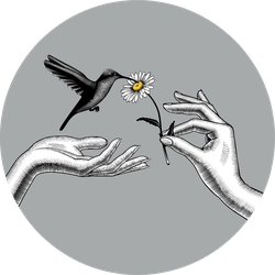 Two Hands With A Chamomile Flower And Hummingbird Sticker