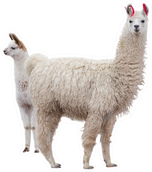 Two Llamas Mom And Baby Sticker