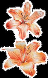 Two Orange Lilies Watercolor Sticker